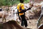 Armed herdsmen kill 100 people in Southern Kaduna in 6 days, destroy houses, valuables